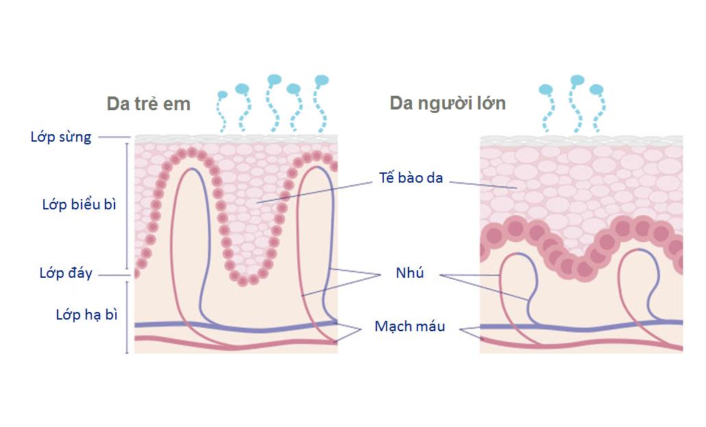 cấu trúc da của trẻ sơ sinh